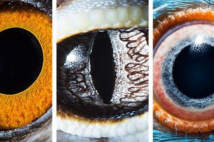 Ojos de animales: la macro fotografía de SurenManvelyan