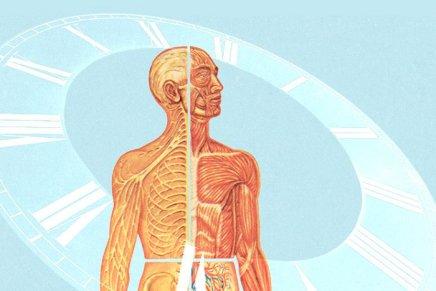 ¿Qué le pasará a tu cuerpo en2015?