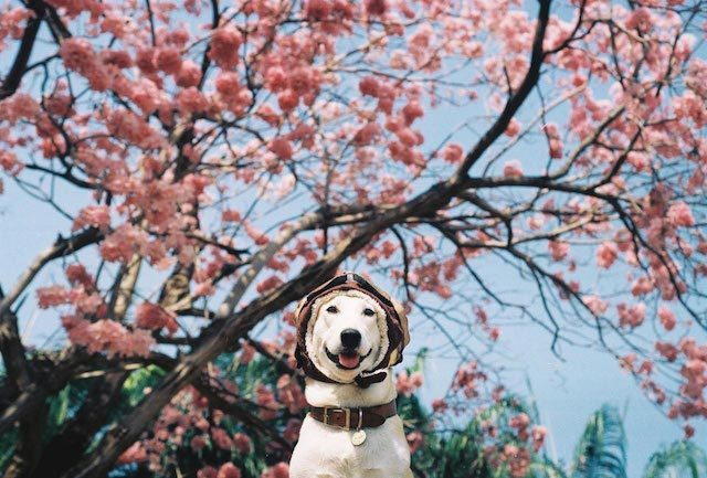 Gluta-The-Happy-Smiling-Dog-11