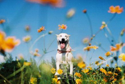 Este es Gluta, el perro más feliz delmundo