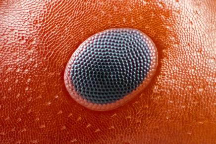 Insects unlocked: microfotografía digital de insectos y de dominiopúblico