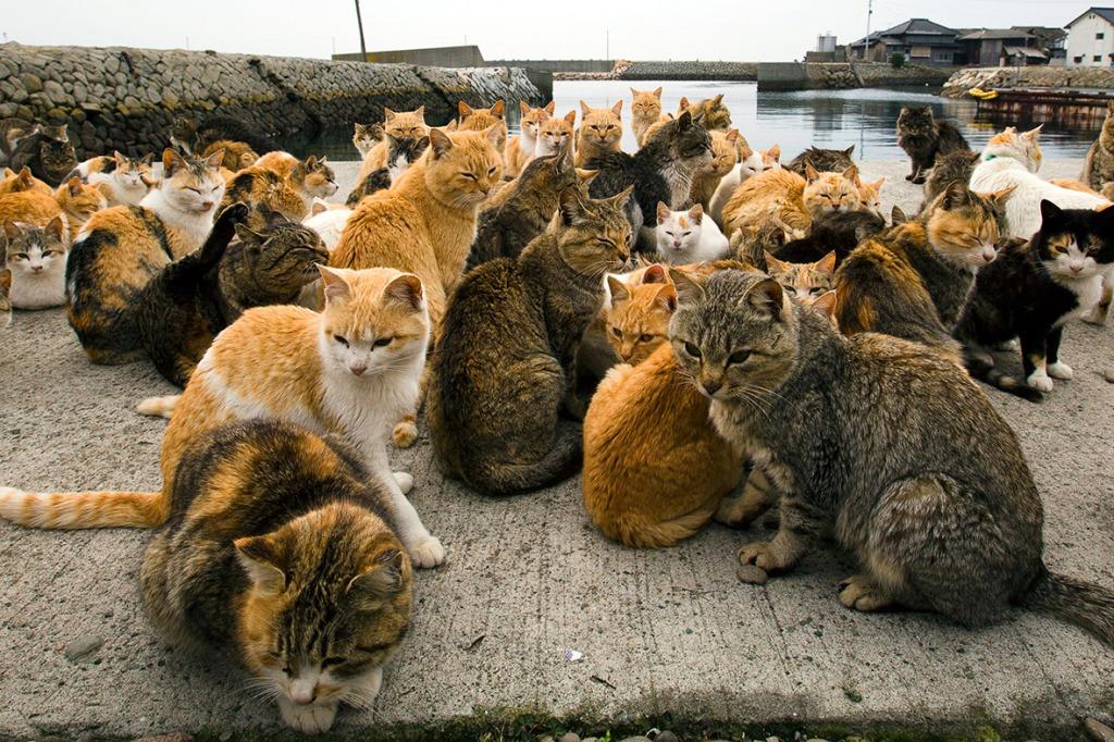 aoshima-cat-island-japan (1)