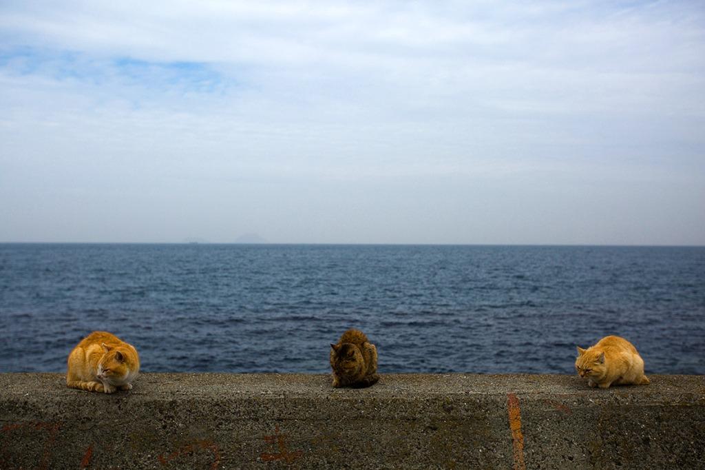aoshima-cat-island-japan (10)