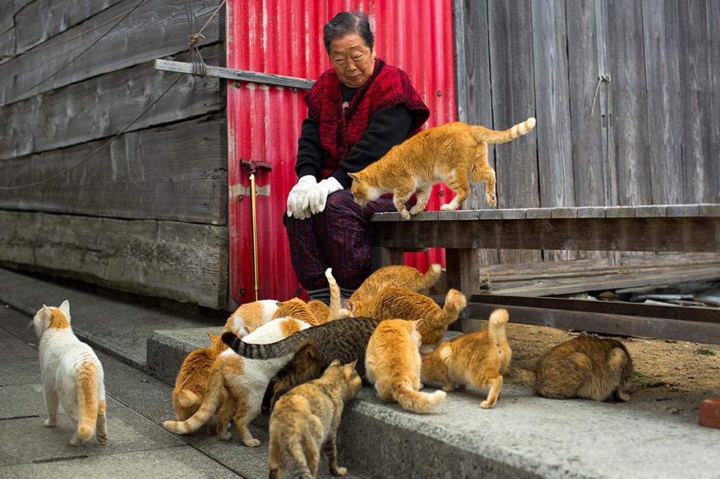aoshima-cat-island-japan (11)