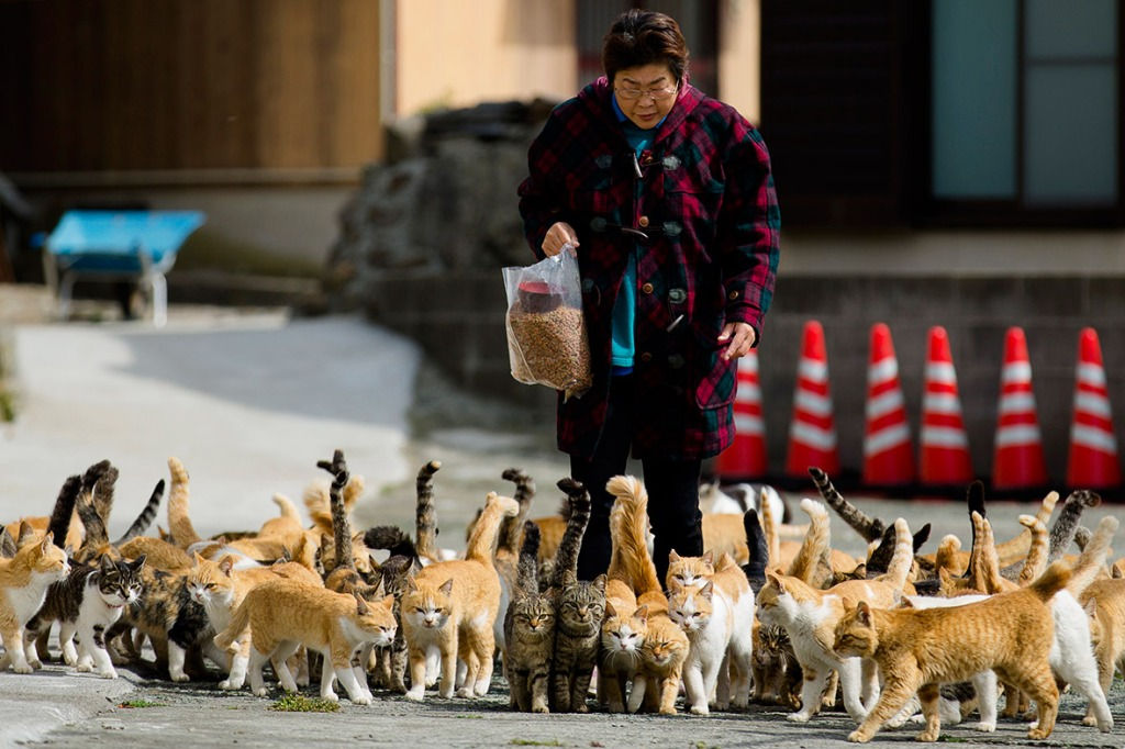 aoshima-cat-island-japan (12)