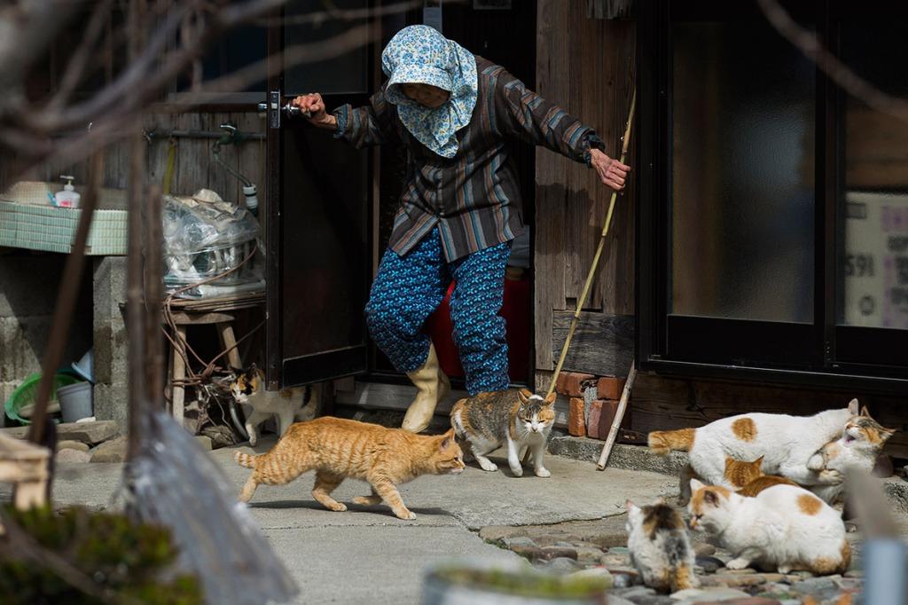 aoshima-cat-island-japan (13)