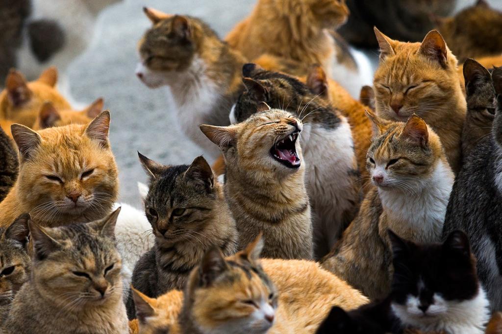 aoshima-cat-island-japan (14)