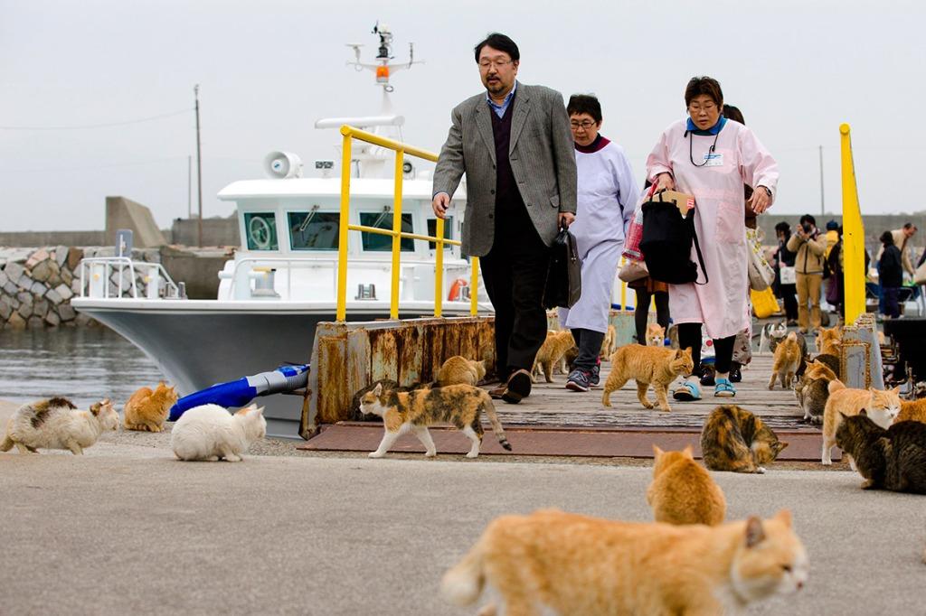 aoshima-cat-island-japan (3)