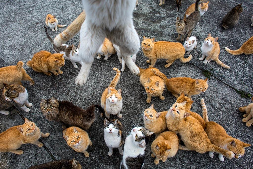 aoshima-cat-island-japan (5)