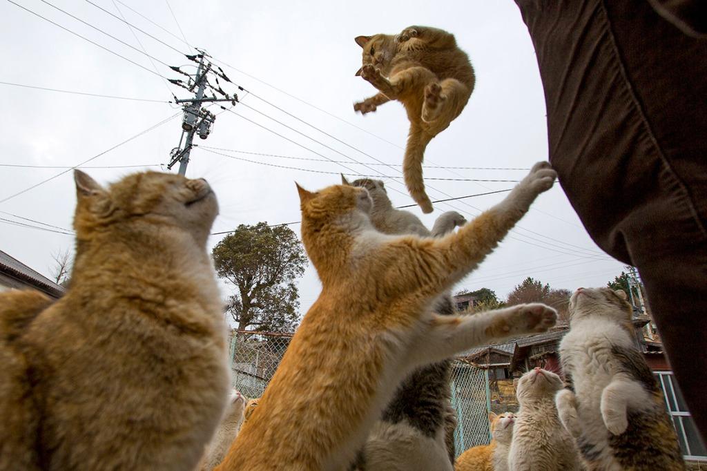 aoshima-cat-island-japan (6)