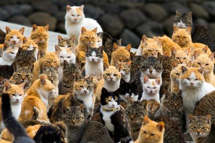 Aoshima: la isla de los gatos enJapón