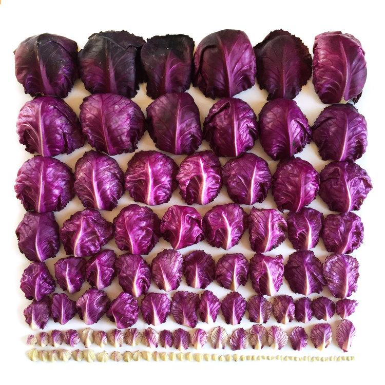 Red+Cabbage+Gradient+--+wrightkitchen.com