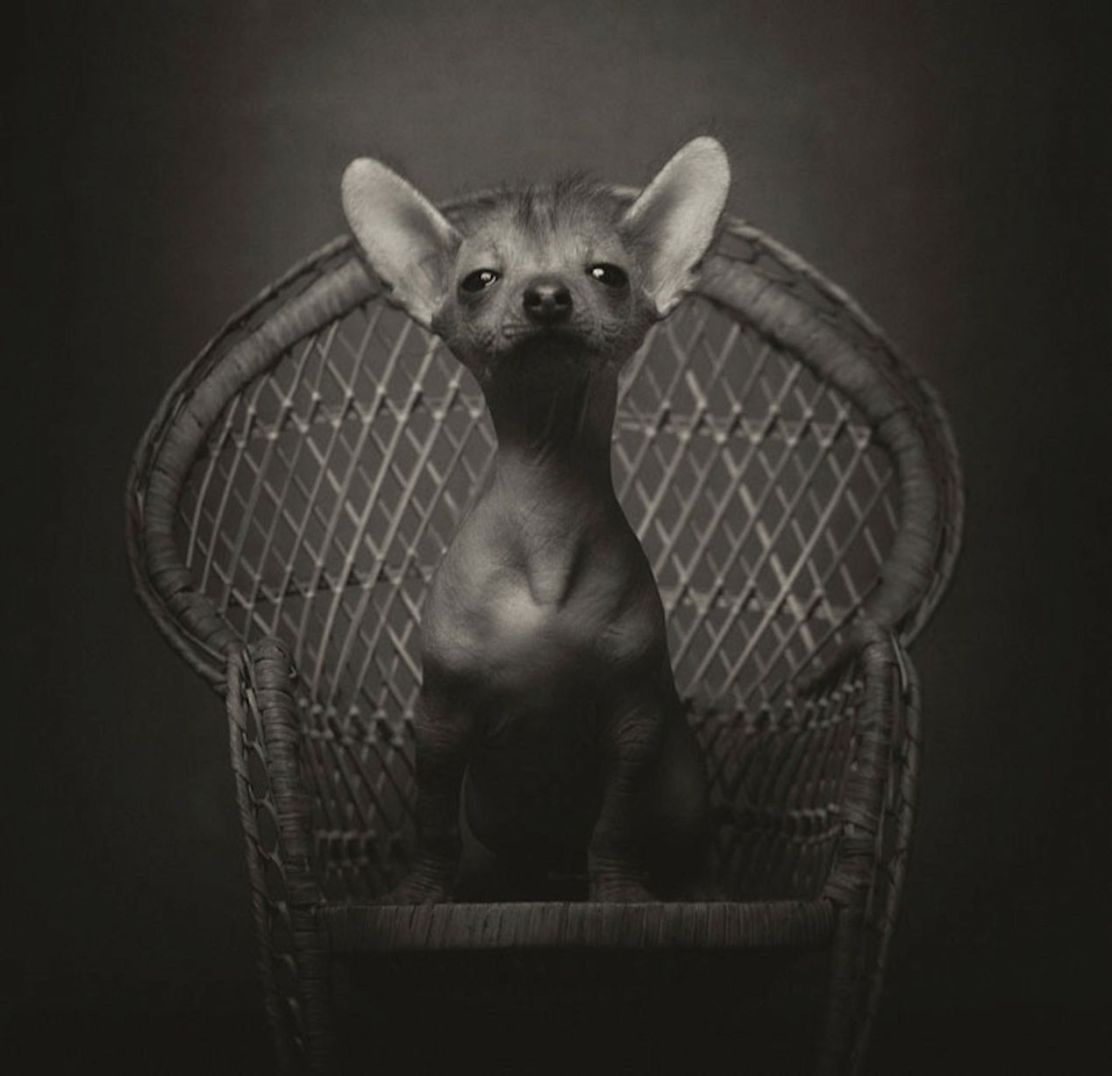 Expressive-Animal-Portraits-by-Vincent-Lagrange (10)