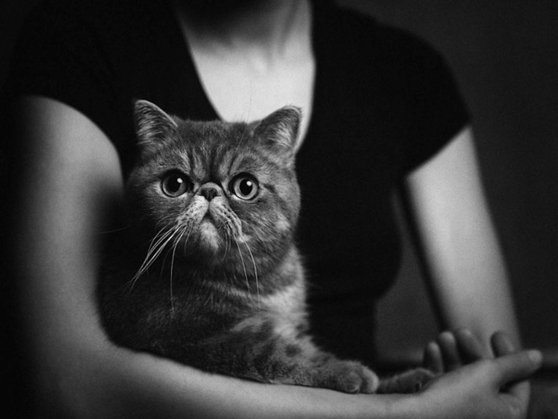 Expressive-Animal-Portraits-by-Vincent-Lagrange (11)