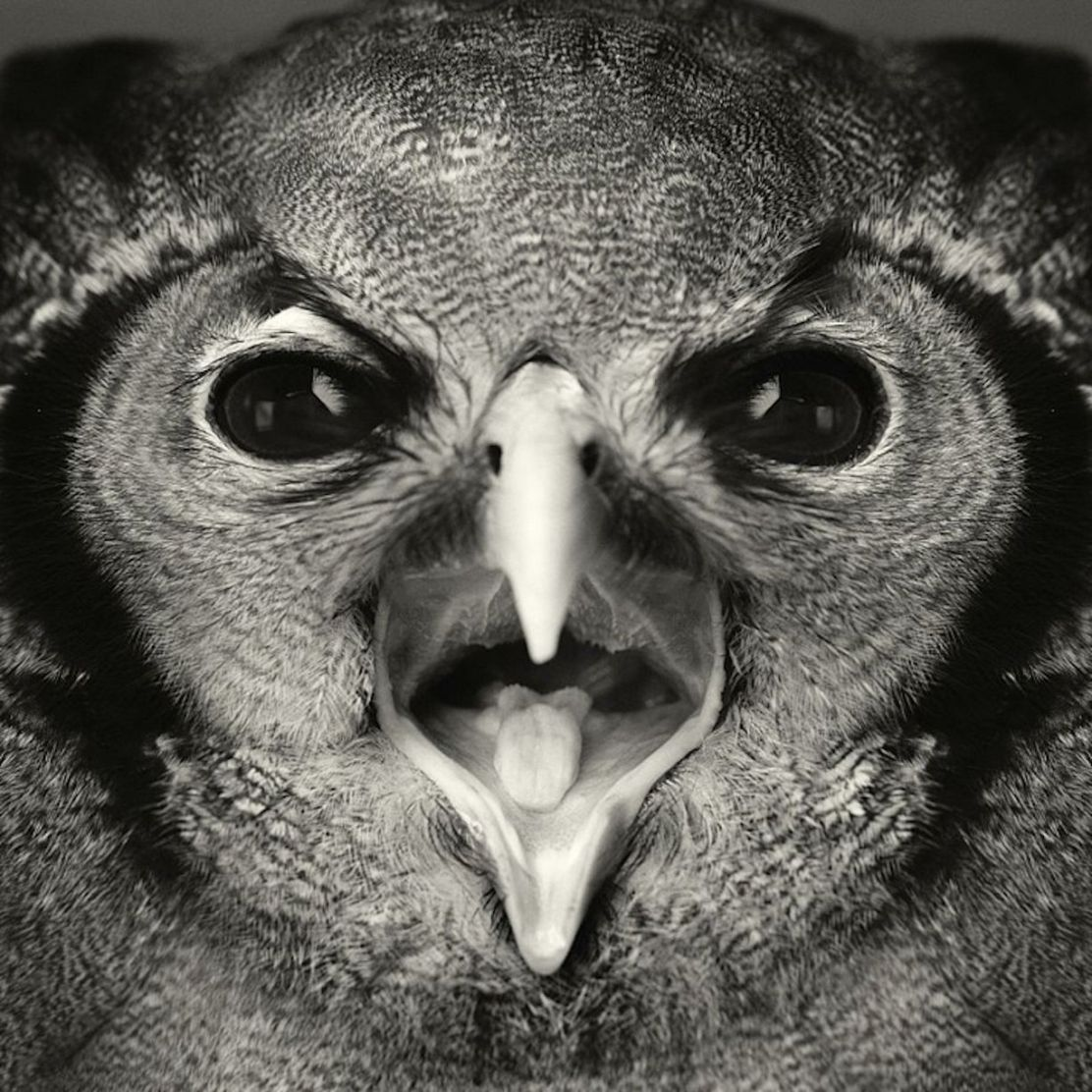 Expressive-Animal-Portraits-by-Vincent-Lagrange (15)
