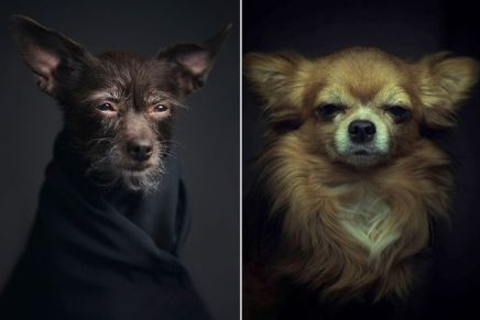 Los expresivos retratos de animales de VincentLagrange