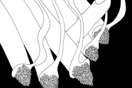 Mrzyk & Moriceau/ Negro sobre blanco/ilustración